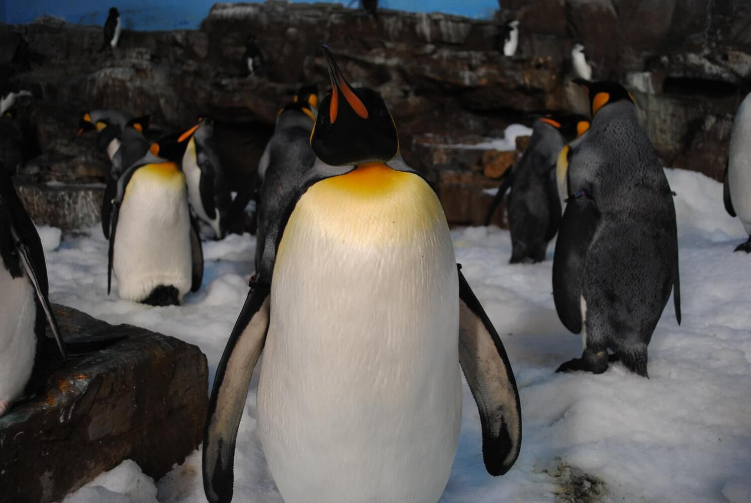 Penguin 3.1 released on November 27th 2014!